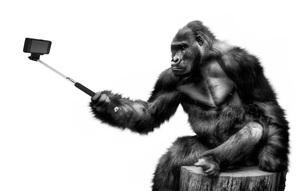 monkey-5575867111.jpg